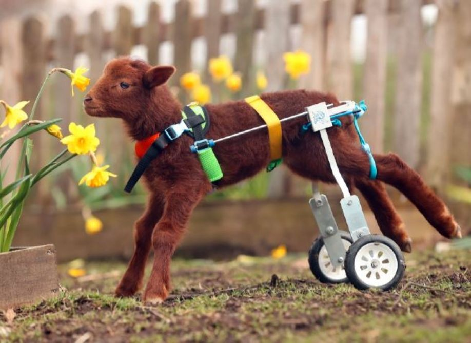 stephen the lamb using his wheelchair
